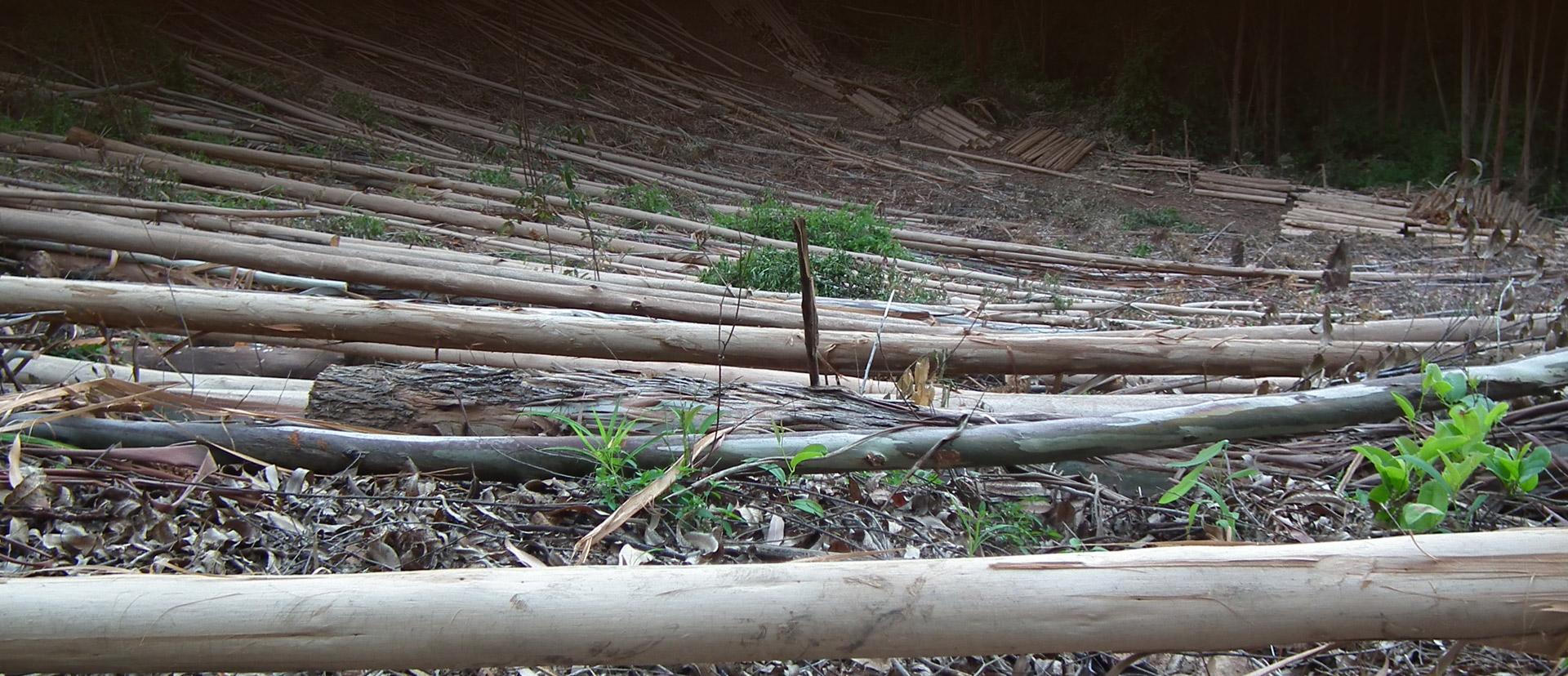 Sabie Poles Sustainable Forest Slider bg