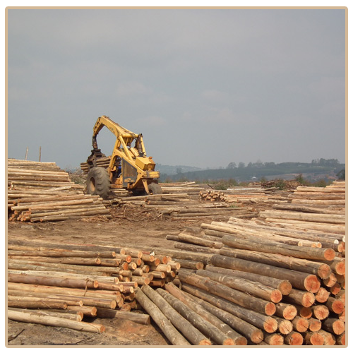 CCA poles Log Yard, Sabie Poles