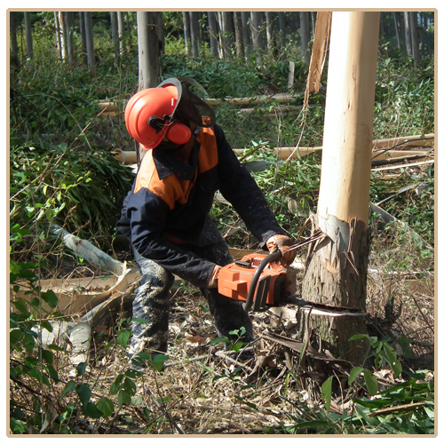 Sowing accountability: Leader in Timber farming, manufacturing, and exporting.