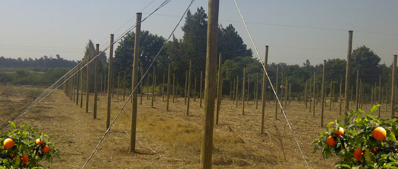 How CCA pressure-treated poles from Sabie Poles can help the Farmers to protect their orchards.