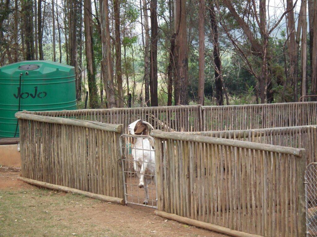 Boer Goat Shed