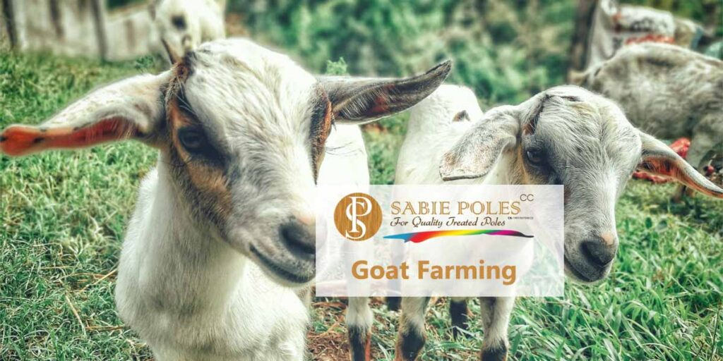 Boer Goat Farming Costs And Shed Plans Sabie Poles