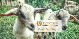 Boer Goat Farming: Costs and Shed Plans ⋆ Sabie Poles