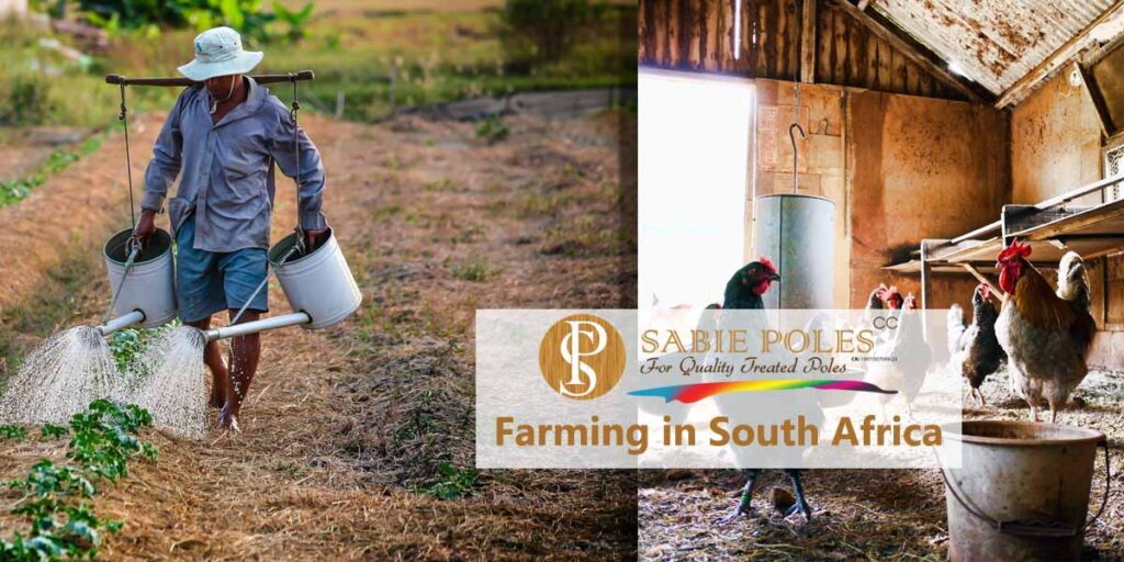 Farming Business in your Backyard – South Africa
