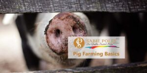 Pig Farming for Beginners