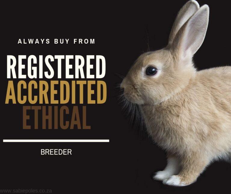 Rabbit Farming Breeds