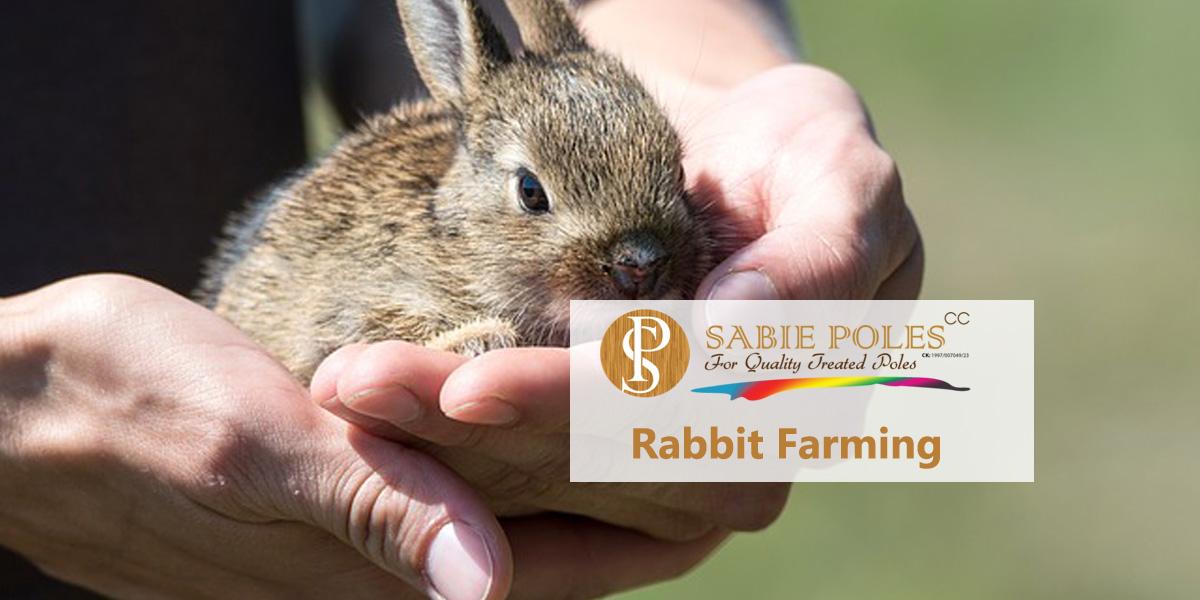 Rabbit Farming: Basic Costs and Preparations ⋆ Sabie Poles