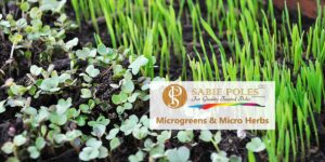Microgreens and Miro Herbs