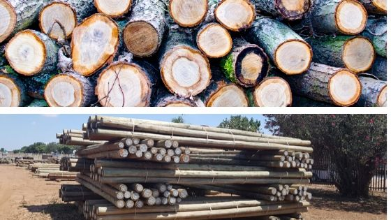 Gum Pole vs. Pine Pole: A comprehensive comparison